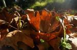 ...desto deutlicher spürt man, dass es Herbst wird.