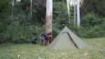 Zeltaufbau auf dem Wooton-Way-Rastplatz im Myall Nationalpark; neben mir waren sicher noch fünf, sechs Campervans auf der Wiese