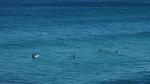 Zwischendrin immer wieder Surfer, die auf die perfekte Welle warten.