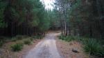 Und auch hier im Wald merkt man, dass der Sommer vorbei ist.