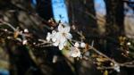 Es ist Frühling....