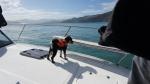 Buster, der bordeigenene Bootshund, kann Delfine im Wasser hören.